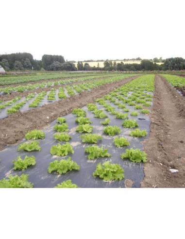 Paillage Spécial Salade