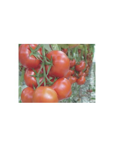 Substrat Premier Tech FALIENOR Tomate
