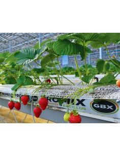 Substrat fraisiers Tourbe +...